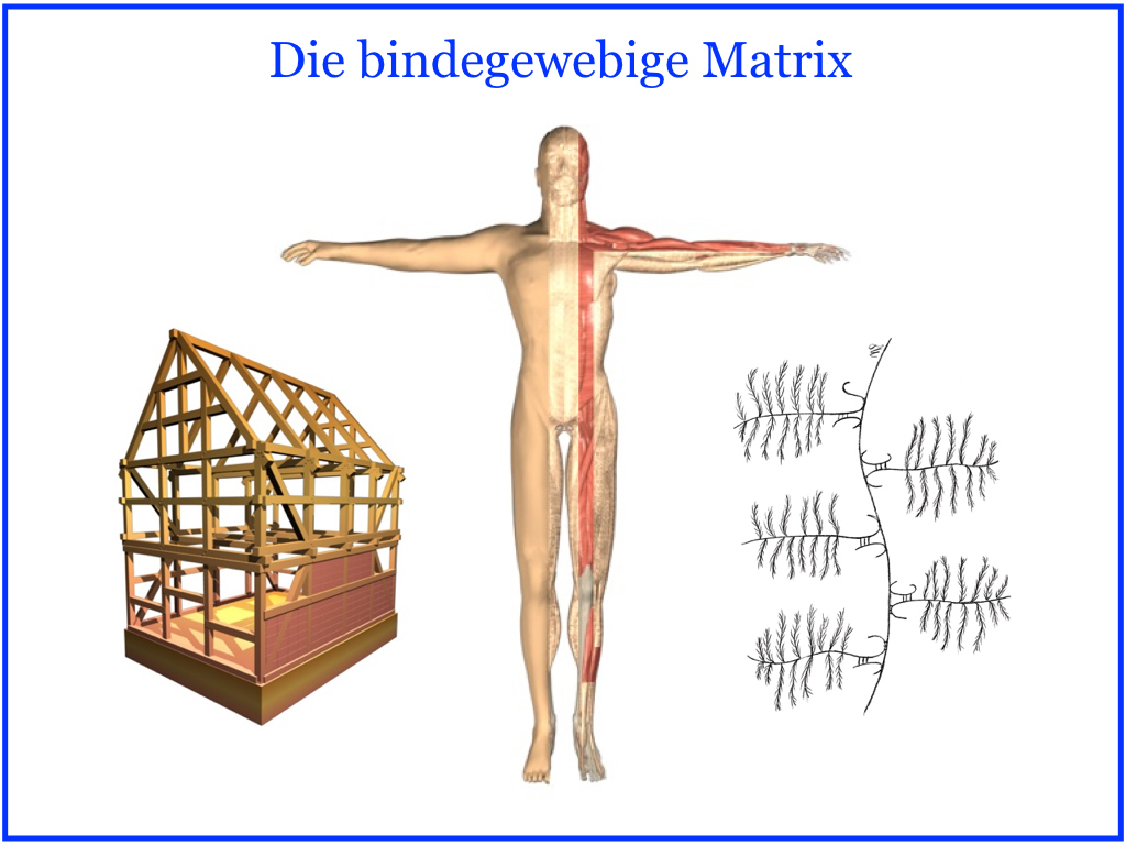 Den Körper in seiner Funktion verstehen – Die Bindegewebe Matrix ...